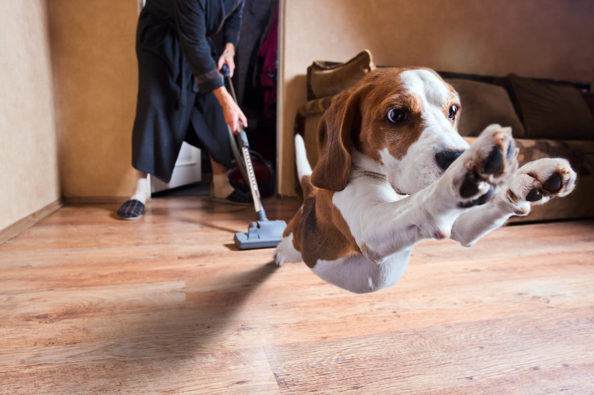 how to keep house clean with dogs